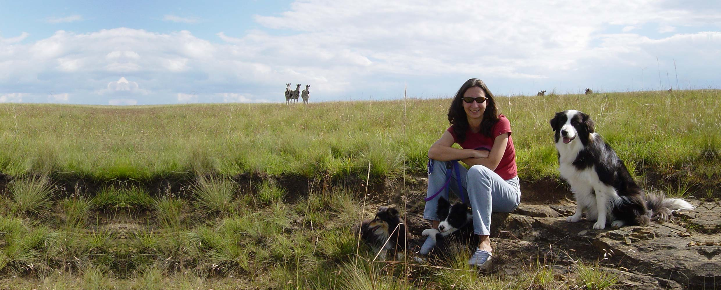 Alison Roets with Odin the Border Colie and zebras on the highveld South Africa