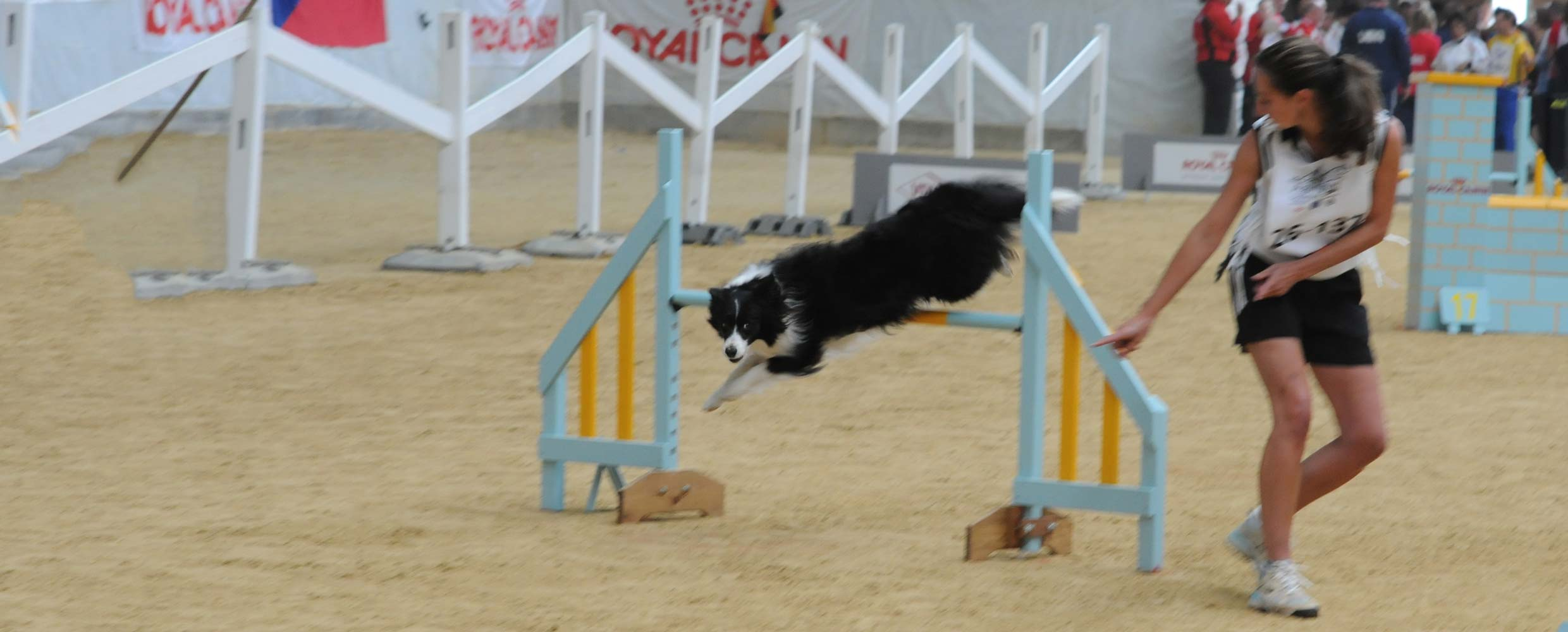 Alison Roets with Freya the Border Collie taking a hurdle