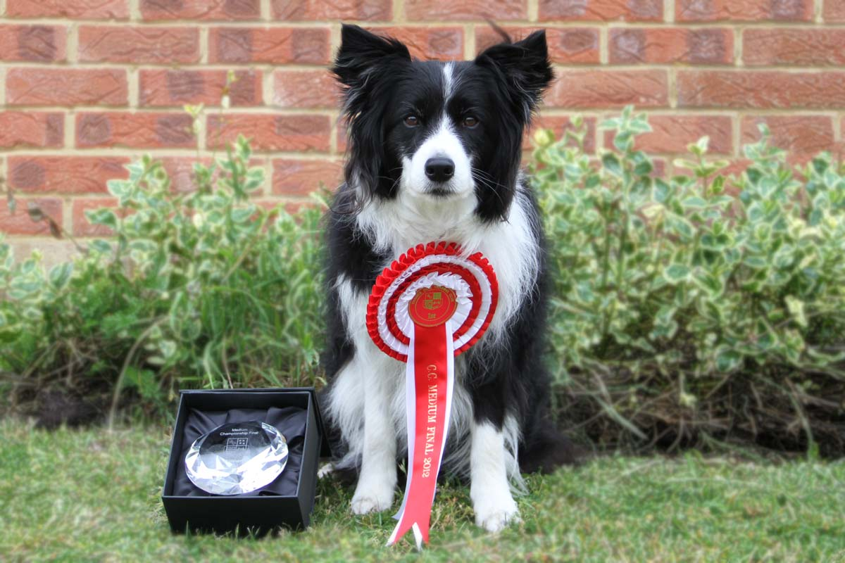 Freya the BorderCollie with Thames Agility Championship trophy and rosette
