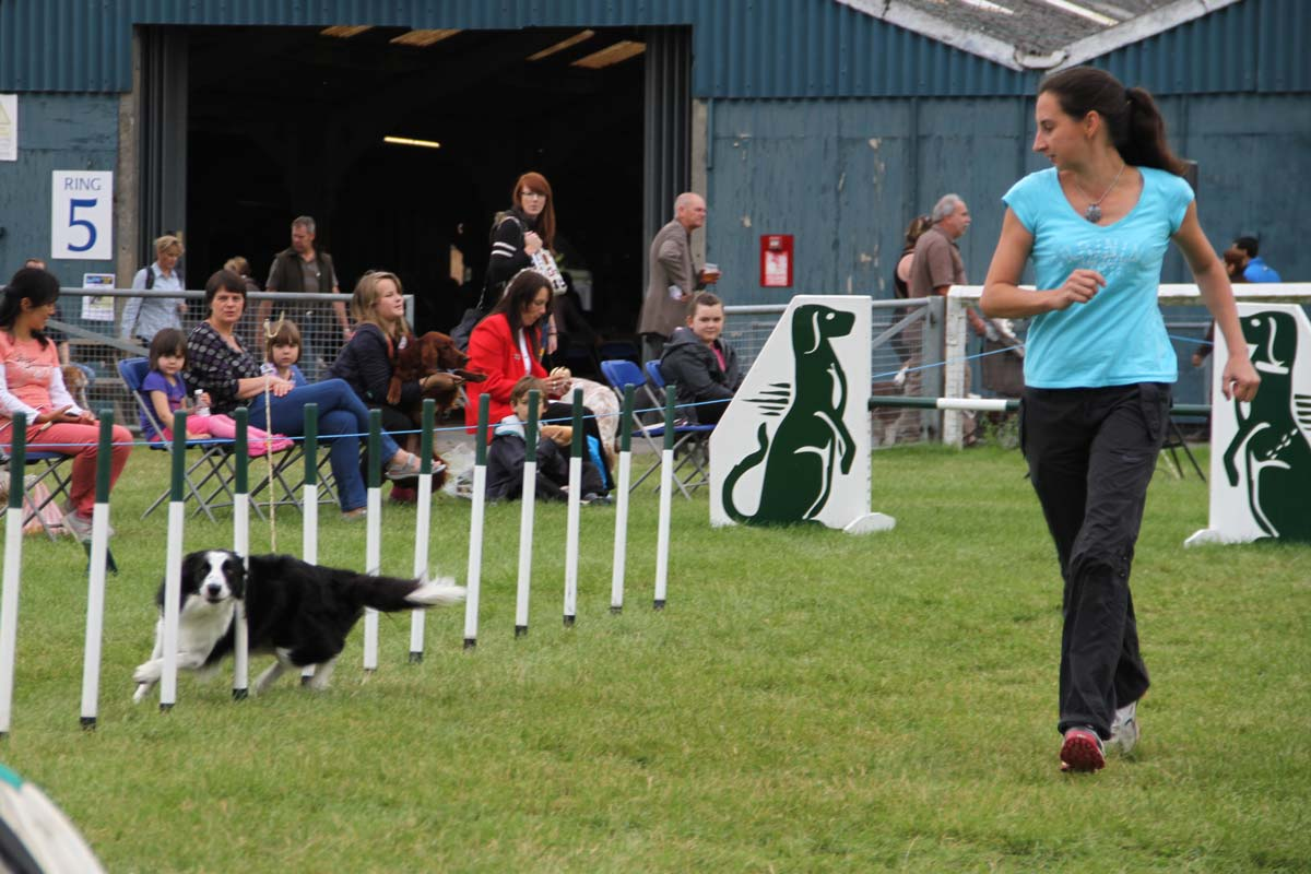 Alison Roets abd Border Collie Ostara at Olympia semi-final