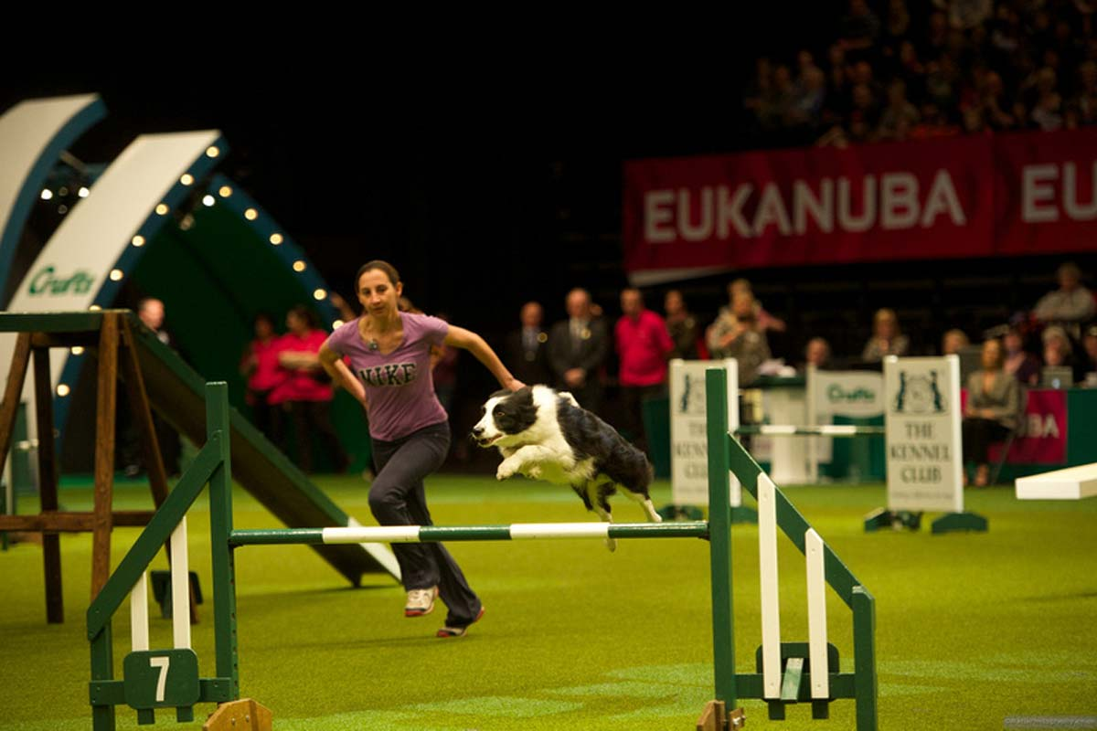 Alison Roets running Border Collie Ostara at Crufts