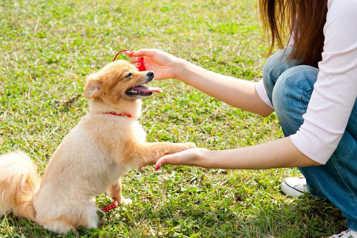 Alison Roets dog training a toy pom