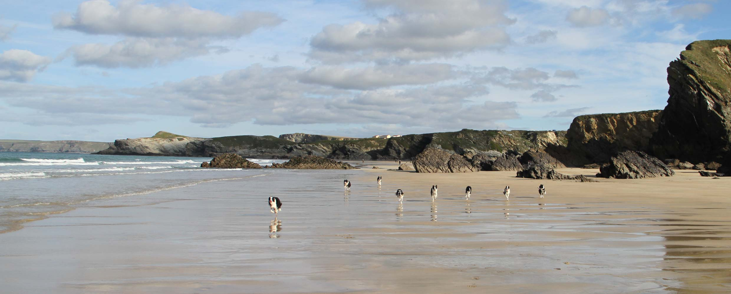 Alison's Border Collies doing a long distant recall across the beach in Newquay, Cornwall