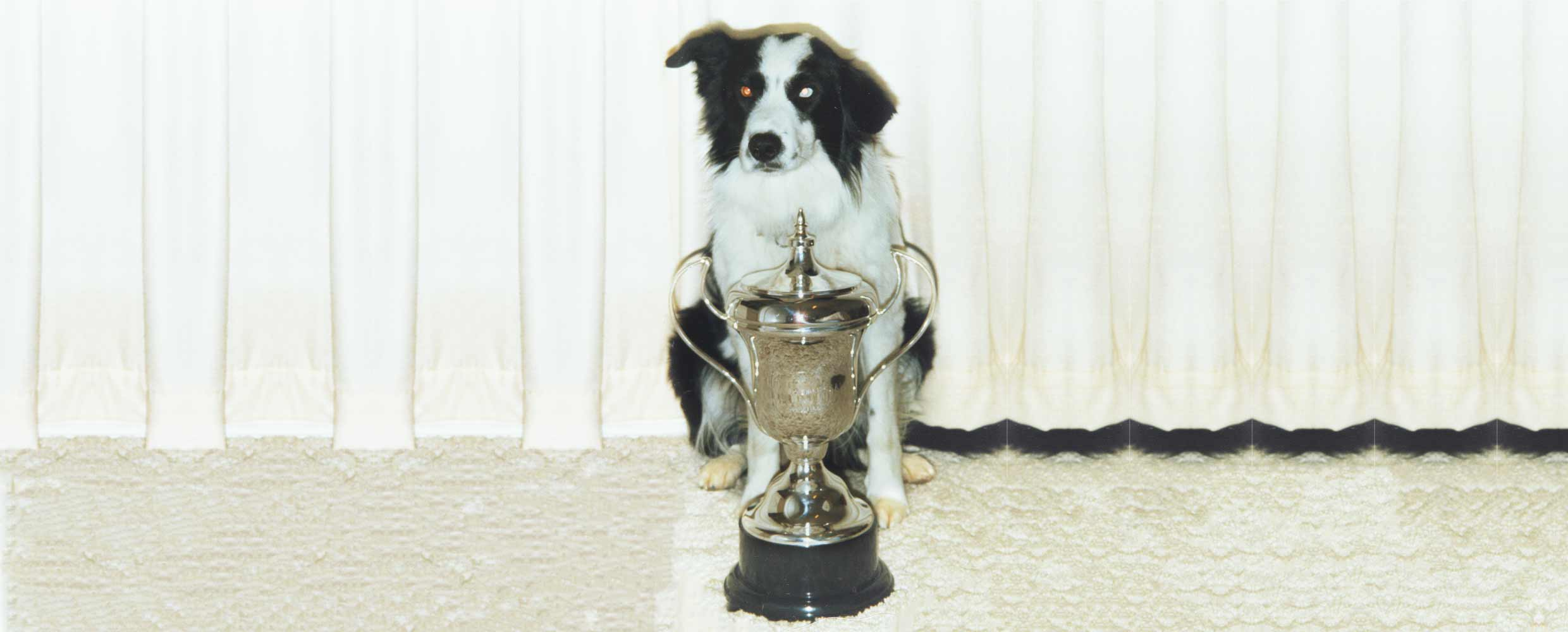 C-test obedience champion Border Collie Hamish trained by Alison Roets