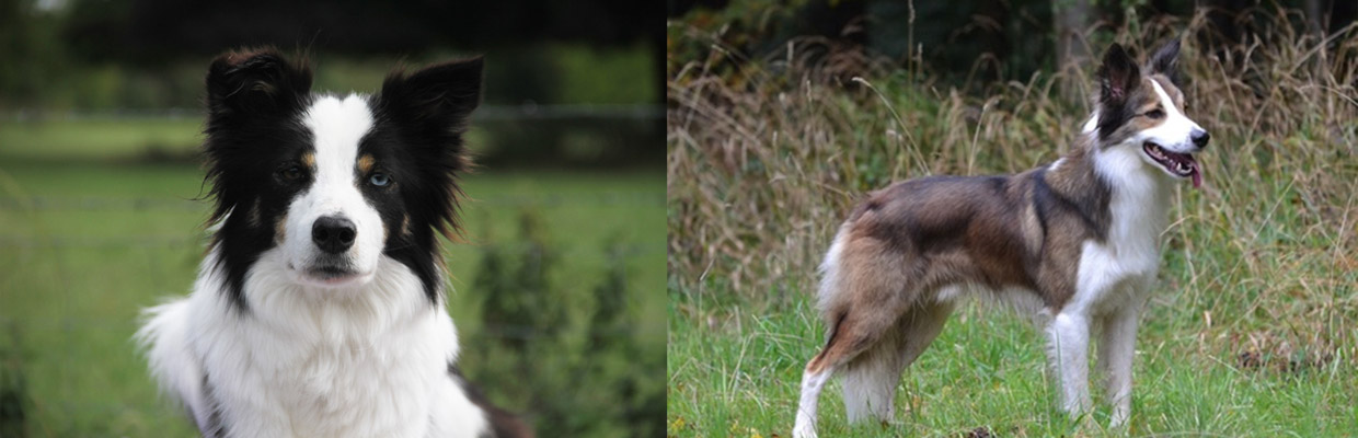 Freyasway Border Collies Talisker and Toby